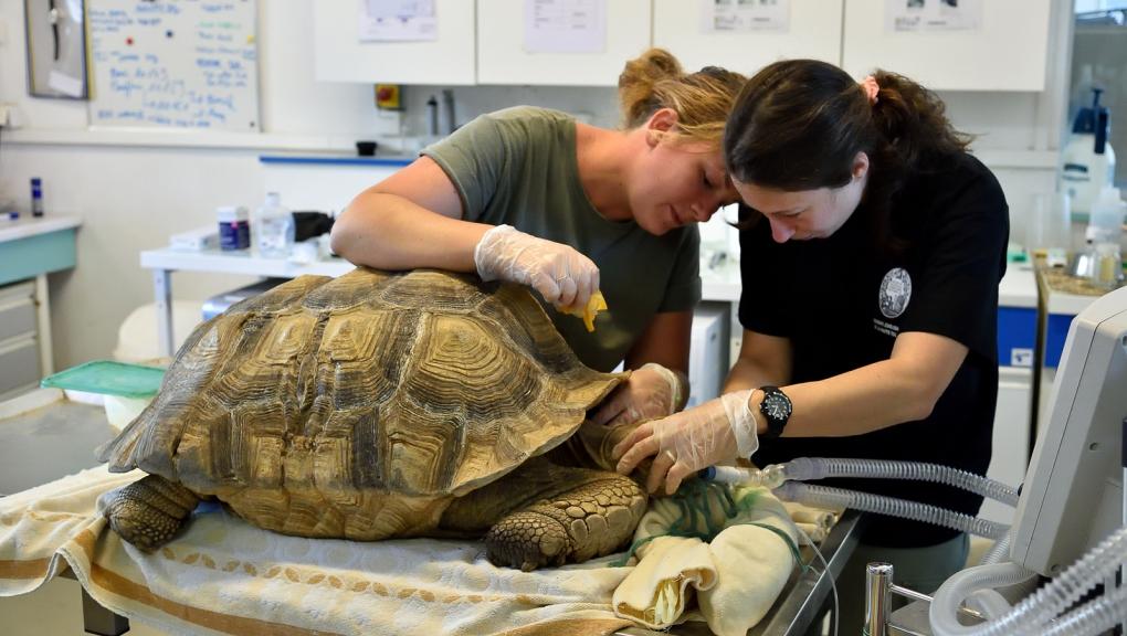 Vétérinaire et soigneur à la Réserve © MNHN - F-G Grandin